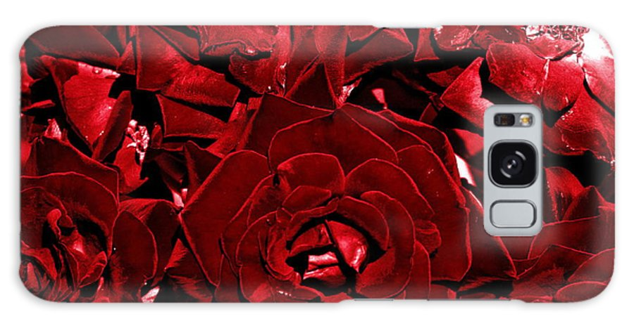 Blood Red Roses Galaxy S8 Case featuring the photograph Blood Red Roses by Vineta Marinovic
