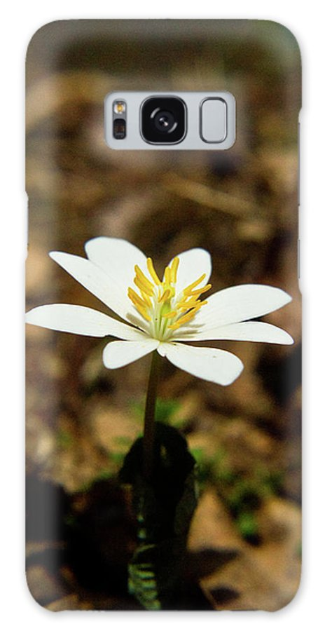 Sanguinaria Galaxy S8 Case featuring the photograph Bloodroot 2 by Douglas Barnett