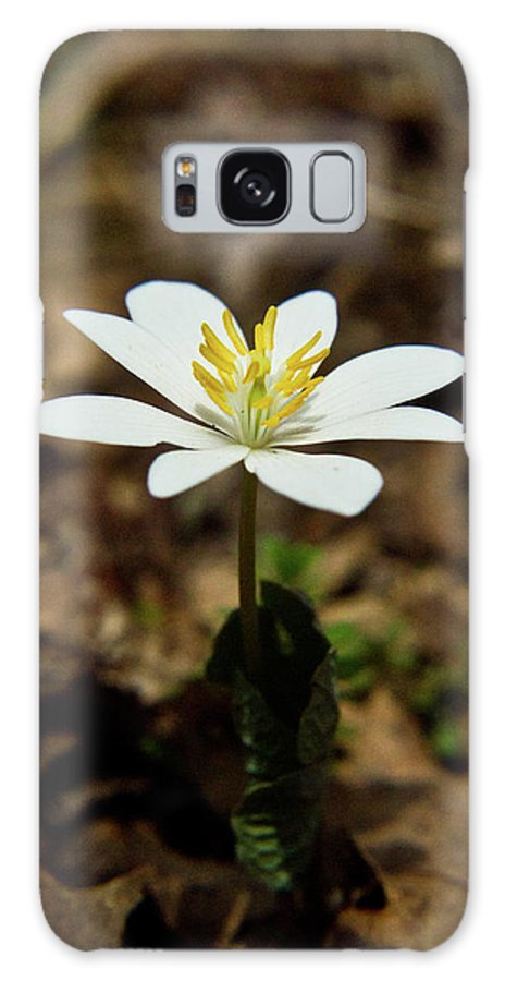 Sanguinaria Galaxy S8 Case featuring the photograph Bloodroot by Douglas Barnett