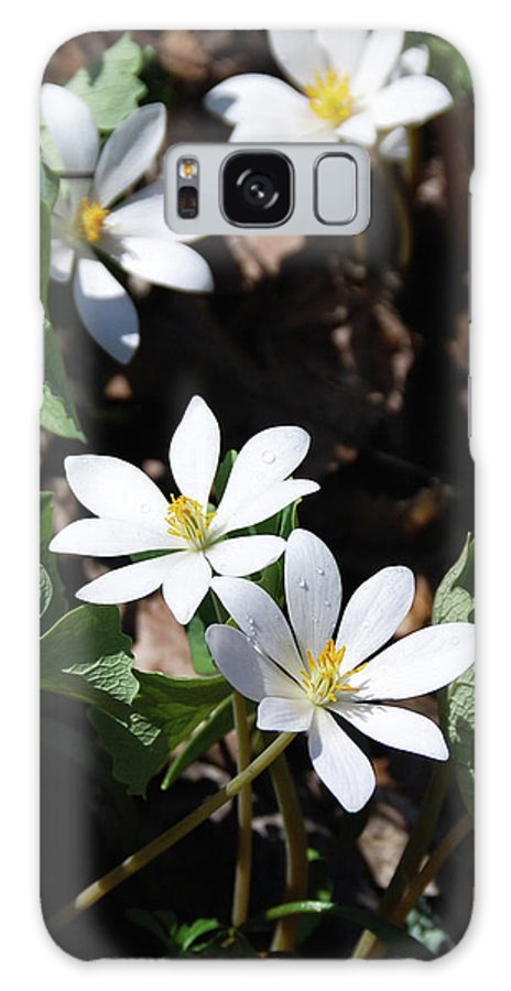 Flowers Galaxy S8 Case featuring the photograph Bloodwart 1115 by Guy Whiteley
