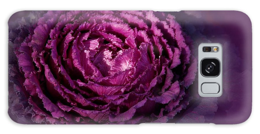 Purple Galaxy S8 Case featuring the photograph Blooming Cabbage by Angie Tirado