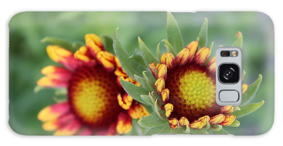 Flower Galaxy S8 Case featuring the photograph Blooms Of Color by Alexis Ketner