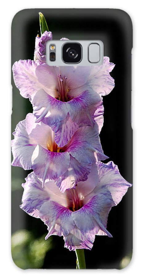 Blooms Galaxy S8 Case featuring the photograph Blooms On A Stick by Christopher Holmes