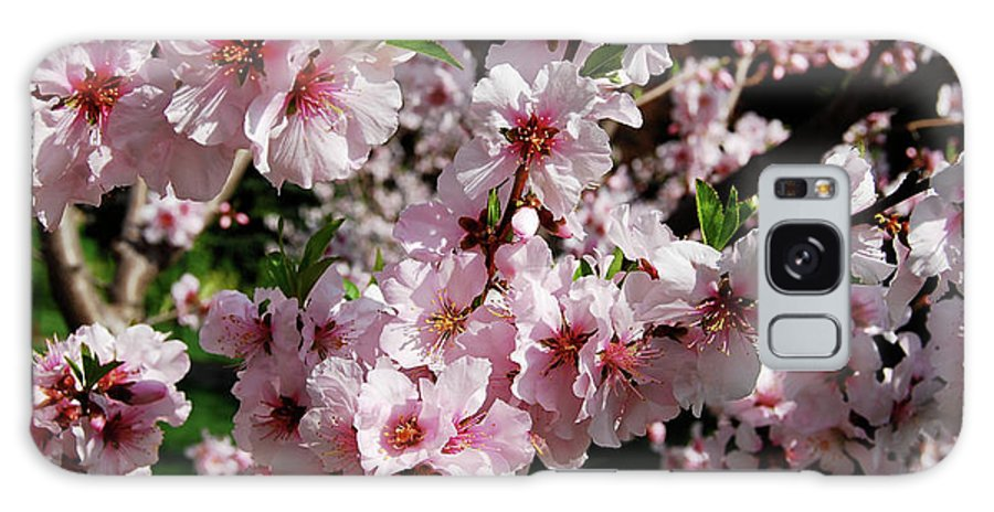 Almond Galaxy S8 Case featuring the photograph Blossoming Almond Branch by Michael Peychich