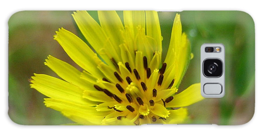 Flower Galaxy Case featuring the photograph Blossoming Yellow Goatsbeard by Melissa Parks