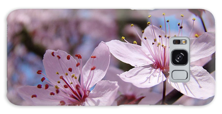 Blossom Galaxy S8 Case featuring the photograph Blossoms Art Prints Pink Spring Tree Blossoms Canvas Baslee Troutman by Baslee Troutman