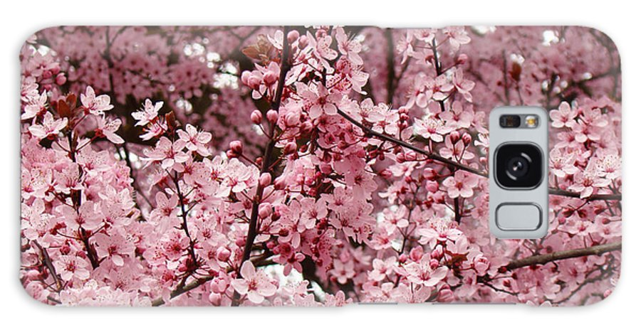 Nature Galaxy S8 Case featuring the photograph Blossoms Pink Tree Blossoms Giclee Prints Baslee Troutman by Baslee Troutman