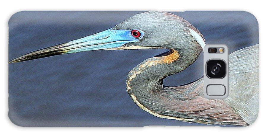 Paradise Galaxy S8 Case featuring the photograph Blue Beak by Sean Allen