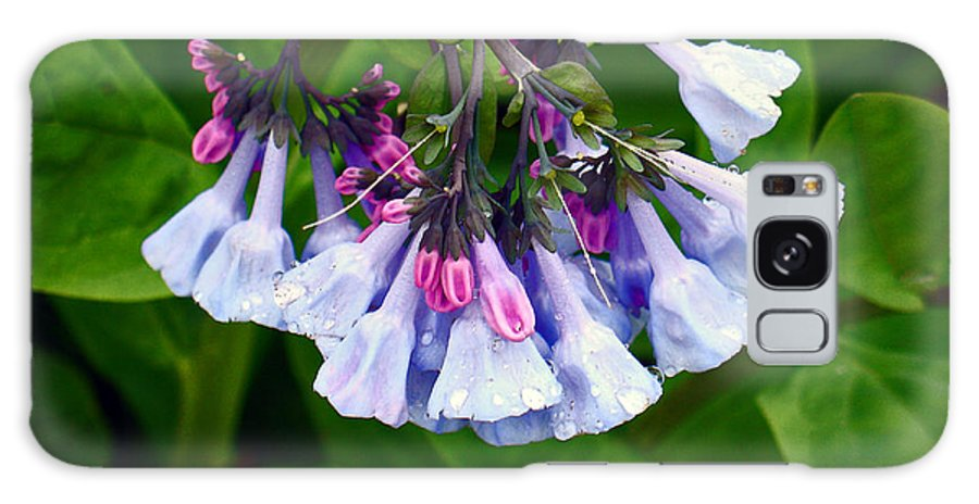 Native Landscape Galaxy S8 Case featuring the photograph Blue Bells by Steve Karol