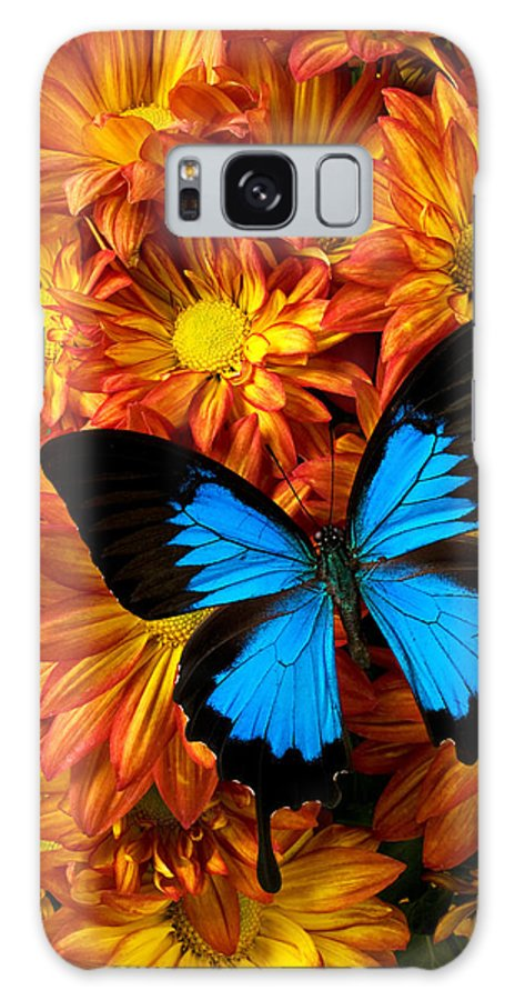 Butterfly Galaxy S8 Case featuring the photograph Blue Butterfly On Mums by Garry Gay