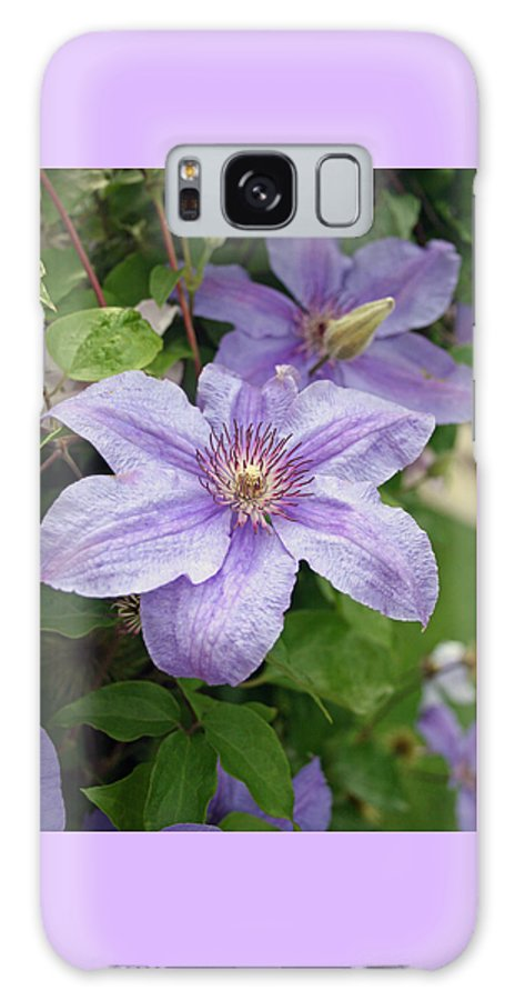 Clematis Galaxy Case featuring the photograph Blue Clematis by Margie Wildblood