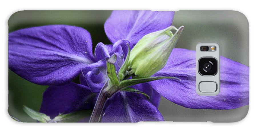 Columbine Galaxy S8 Case featuring the photograph Blue Columbine Squared 1 by Teresa Mucha