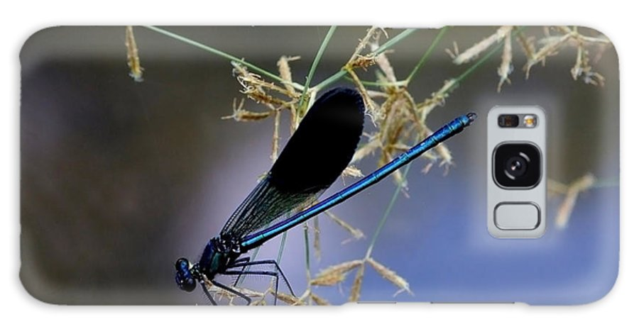 Damsfly Galaxy S8 Case featuring the photograph Blue Damsfly by Cliff Norton