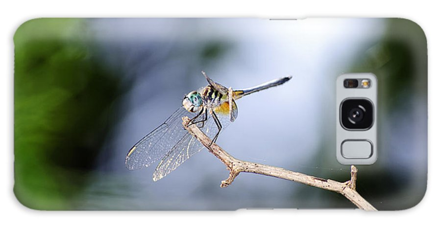 Dragonfly Galaxy S8 Case featuring the photograph Blue Dasher Dragonfly by Kenneth Albin