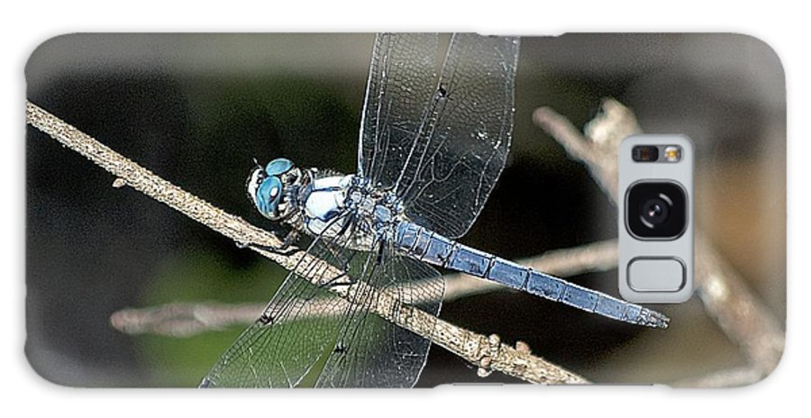 Wildlife Galaxy S8 Case featuring the photograph Blue Dasher by Kenneth Albin