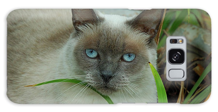 Cat Galaxy S8 Case featuring the photograph Blue Eyes In The Garden by Kathi Shotwell