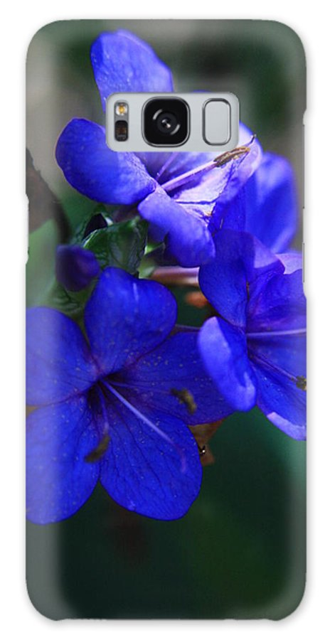 Blue Flowers Galaxy S8 Case featuring the photograph Blue For The Sun by Mandy Shupp