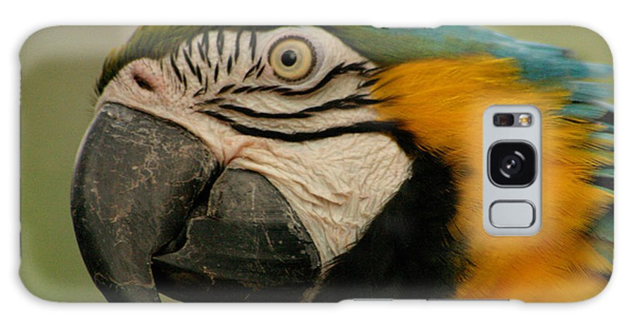 Parrot Galaxy Case featuring the photograph Blue Gold Macaw South America by Ralph A Ledergerber-Photography