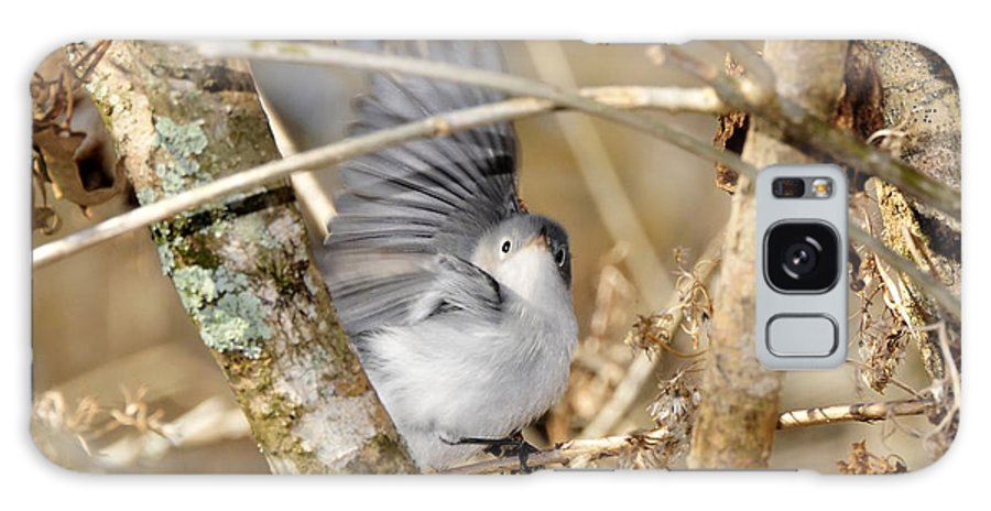 Warbler Galaxy S8 Case featuring the photograph Blue Gray Gnatcatcher by David Lee Thompson