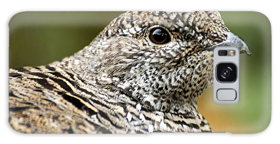 Blue Grouse Galaxy S8 Case featuring the photograph Blue Grouse Hen 2 by Larry Ricker