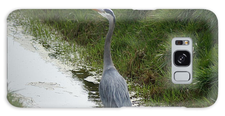 Heron Galaxy Case featuring the photograph Blue Heron by Louise Magno