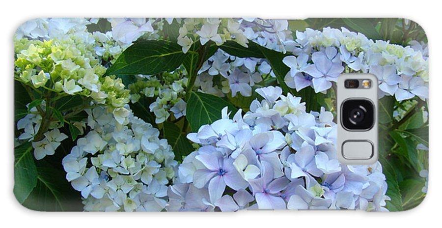 Hydrangea Galaxy S8 Case featuring the photograph Blue Hydrangeas Art Prints Hydrangea Flowers Giclee Baslee Troutman by Baslee Troutman