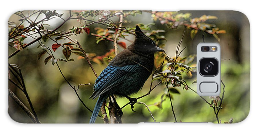 Stellars Jay Galaxy S8 Case featuring the photograph Blue Jay by Bonnie Bruno