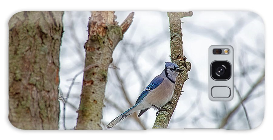 Small Bird Galaxy S8 Case featuring the photograph Blue Jay by David Arment