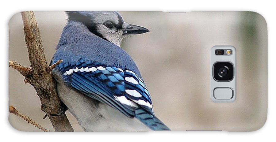 Blue Jay Galaxy S8 Case featuring the photograph Blue Jay by Gaby Swanson