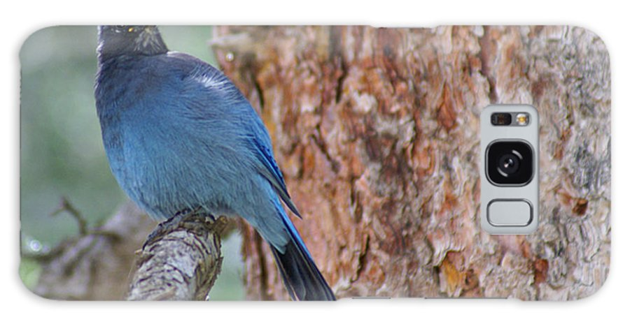 Blue Jay Galaxy S8 Case featuring the photograph Blue Jay by Heather Coen