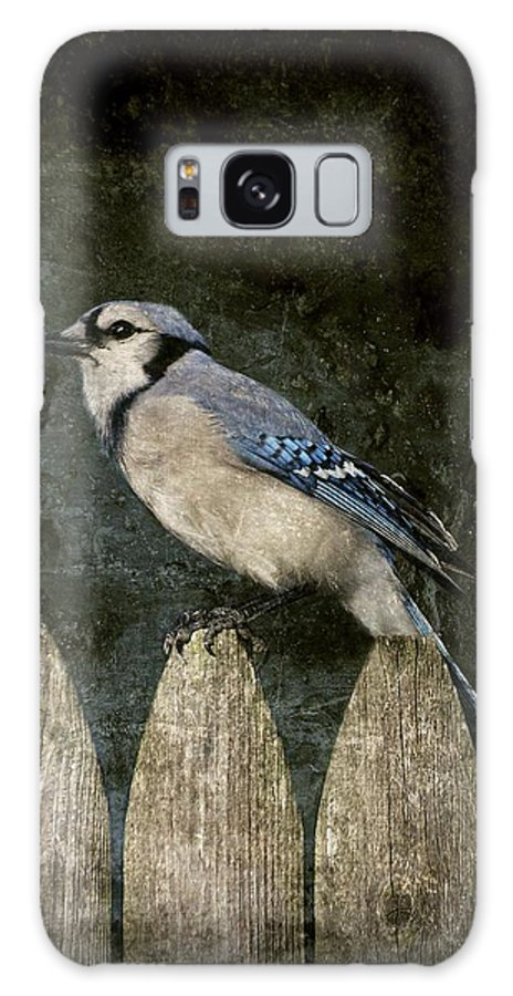 Blue Jay Galaxy S8 Case featuring the photograph Blue Jay On The Fence by Angie Tirado
