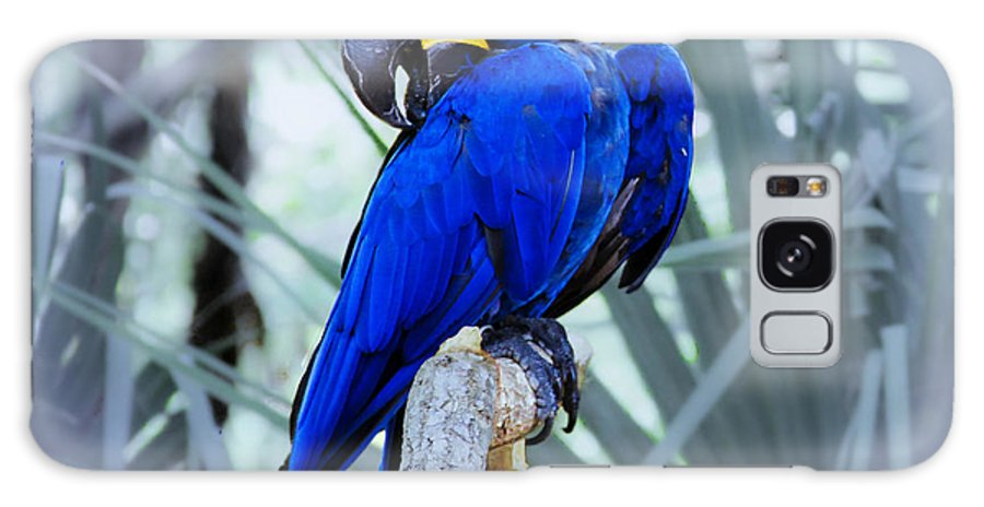 Brevard Zoo Galaxy S8 Case featuring the photograph Blue Parrot by Roger Wedegis