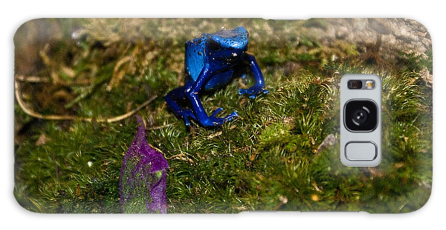 Blue Galaxy S8 Case featuring the photograph Blue Poison Arrow Frog by Douglas Barnett
