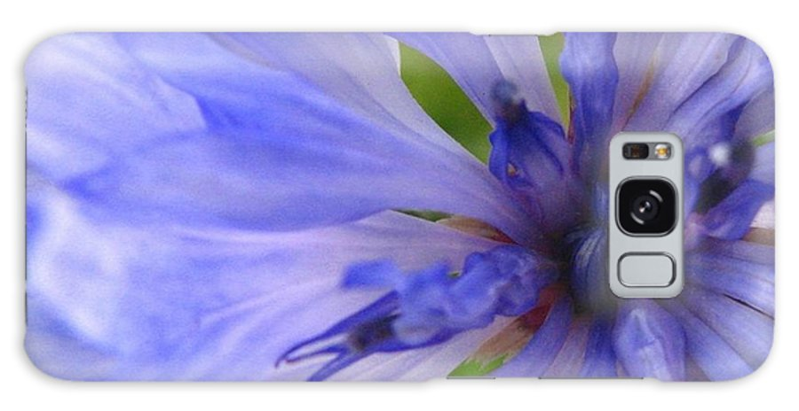 Flower Galaxy S8 Case featuring the photograph Blue Princess by Rhonda Barrett
