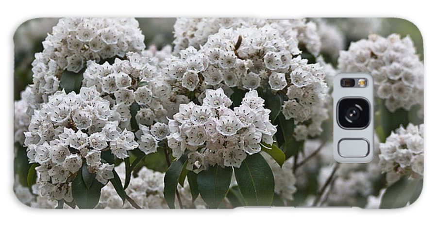 Kalmia Galaxy S8 Case featuring the photograph Blue Ridge Mountain Laurel by Teresa Mucha