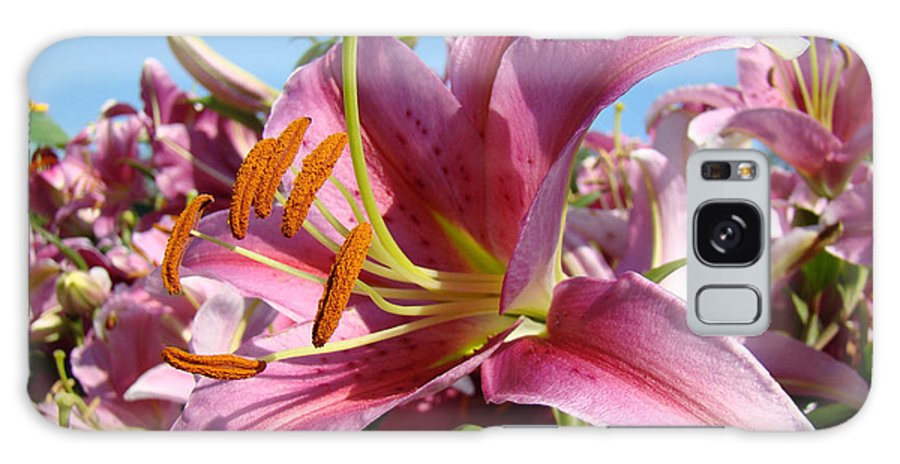 Lilies Galaxy S8 Case featuring the photograph Blue Sky Floral Landscape Pink Lilies Art Prints Canvas Baslee Troutman by Baslee Troutman
