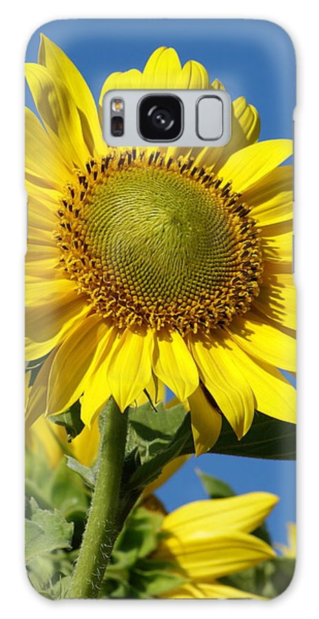 Flowers Galaxy S8 Case featuring the photograph Blue Sky Sunflower Day by Ben Upham III
