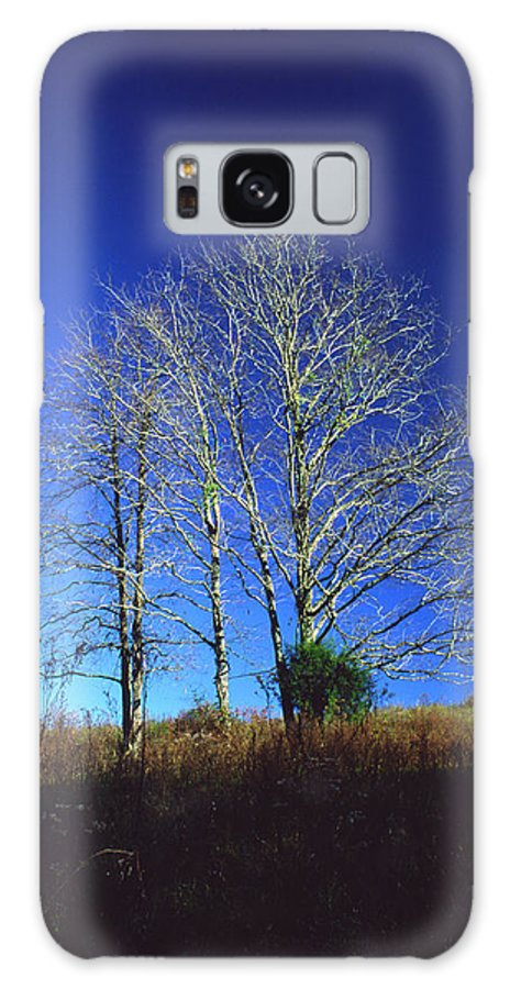 Landscape Galaxy S8 Case featuring the photograph Blue Tree In Tennessee by Randy Oberg