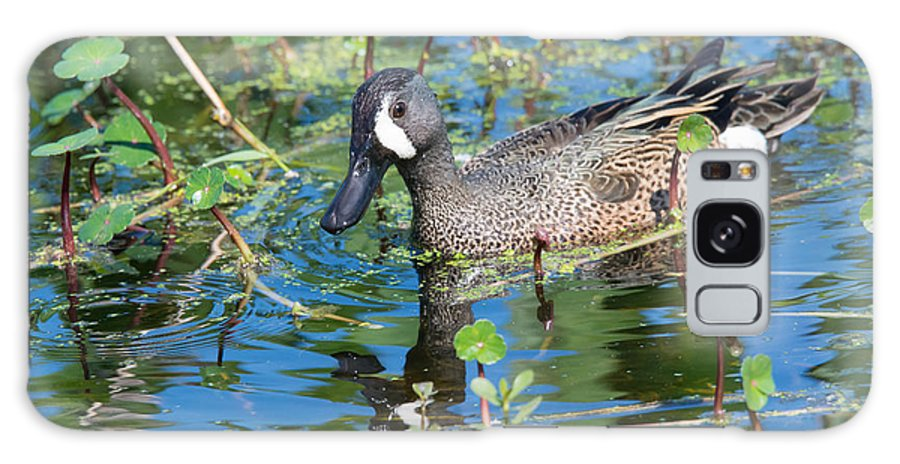 Ducks Galaxy S8 Case featuring the photograph Blue-winged Teal by John Greco