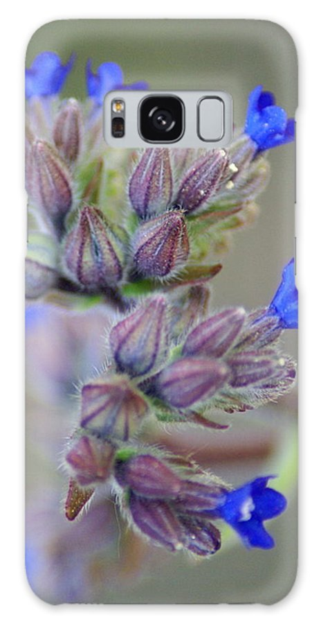 Flowers Galaxy S8 Case featuring the photograph Blues A Bloomin' by Ben Upham III