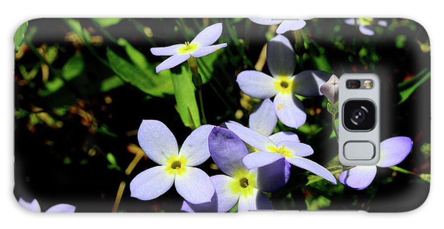 Bluets Galaxy S8 Case featuring the photograph Bluets by Thomas R Fletcher