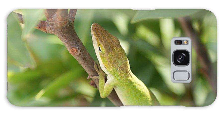 Lizard Galaxy Case featuring the photograph Blusing Lizard by Shelley Jones