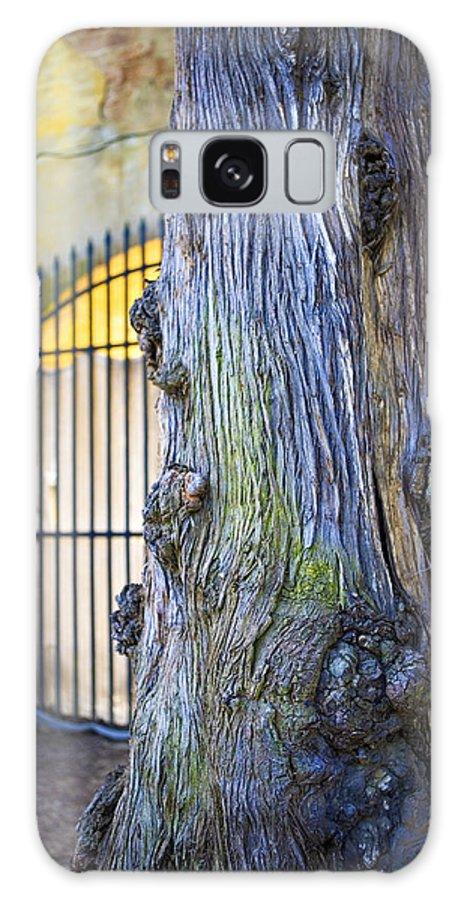 Boboli Galaxy S8 Case featuring the photograph Boboli Garden Ancient Tree by Marilyn Hunt
