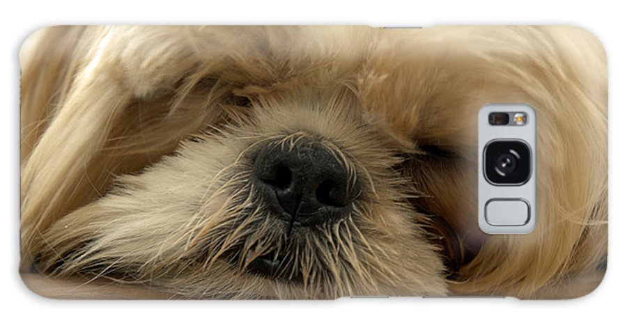 Dog Galaxy S8 Case featuring the photograph Bogie Asleep by Kathi Shotwell