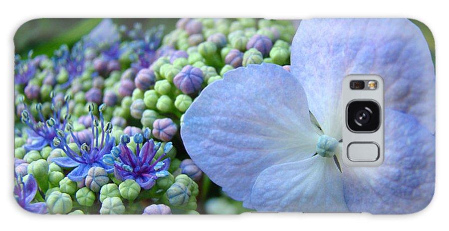 Hydrangea Galaxy S8 Case featuring the photograph Botanical Garden Blue Hydrangea Flowers Baslee Troutman by Baslee Troutman