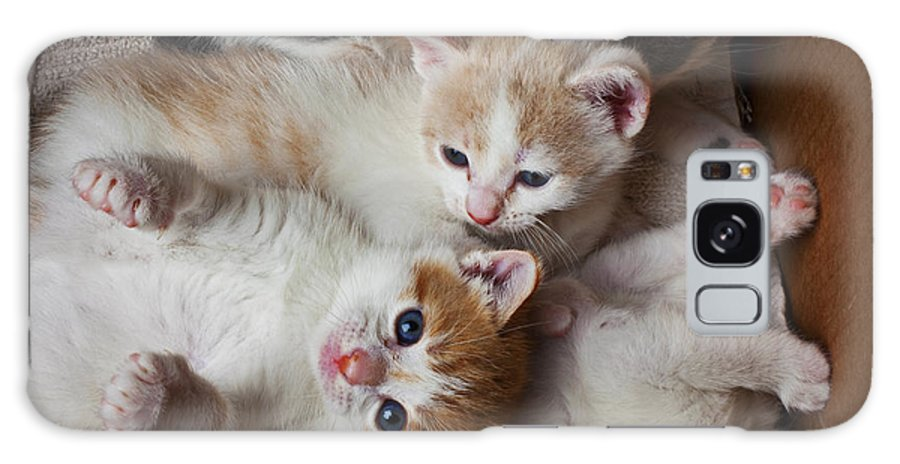 Kitten Galaxy S8 Case featuring the photograph Box Full Of Kittens by Garry Gay
