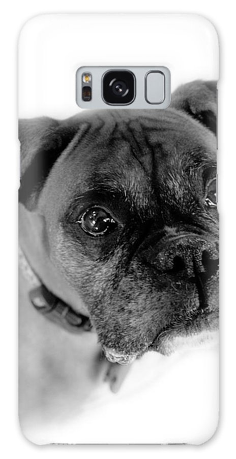 Boxer Galaxy S8 Case featuring the photograph Boxer Dog by Marilyn Hunt