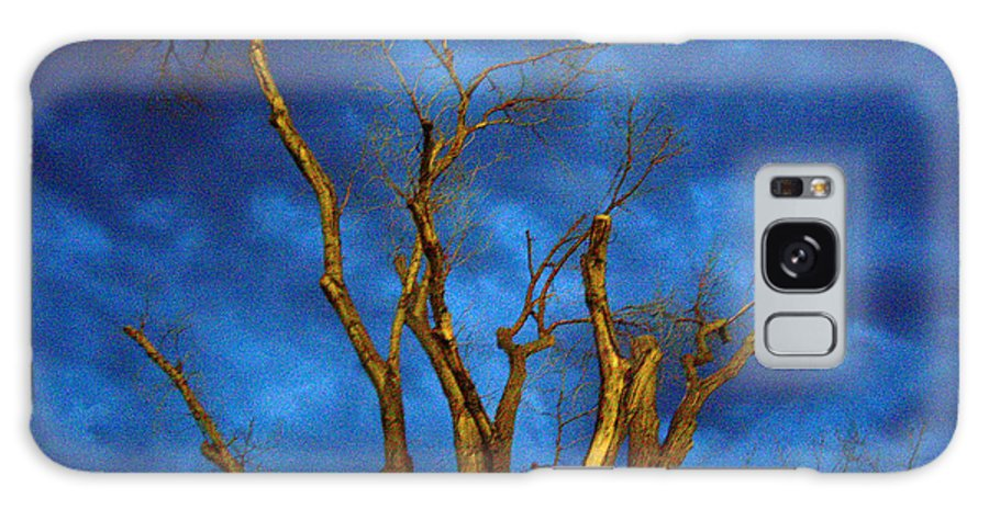 Blue Galaxy S8 Case featuring the photograph Branches Against Night Sky H by Heather Kirk