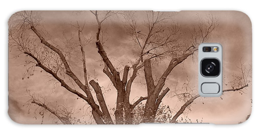 Sepia Galaxy S8 Case featuring the photograph Branches Against Sepia Sky H  by Heather Kirk