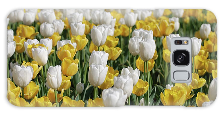 Tulip Galaxy S8 Case featuring the photograph Breathtaking Field Of Blooming Yellow And White Tulips by DejaVu Designs